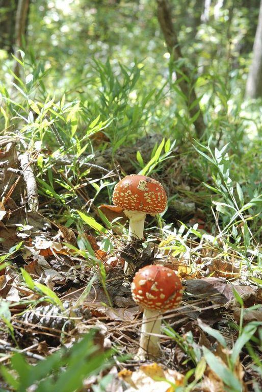 mushrooms in ground