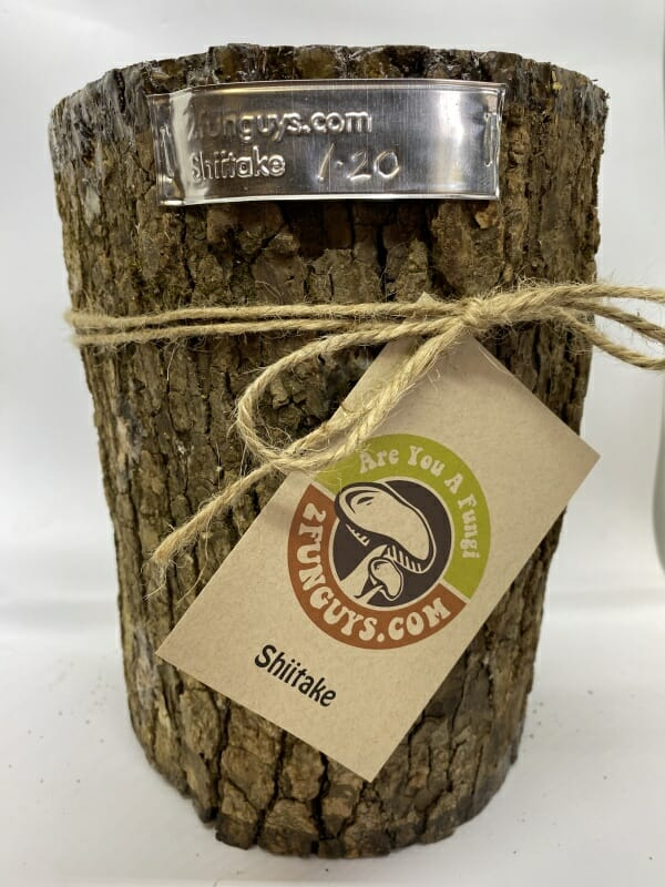 Mr Stumpy Shiitake Mushroom Log